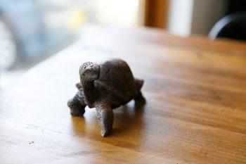 テーブルの上にさりげなく置かれていたのは、ガラパゴス諸島からやってきたゾウガメ。