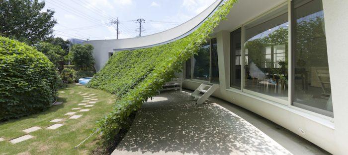 つる性植物が作る緑のカーテンは、室内に入る日差しを遮り、テラスの照り返しも防いでくれるそうだ。