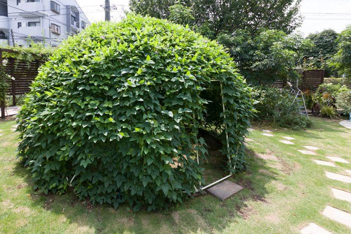 今年新たに庭に登場したのが、バックミンスター・フラーのジオデシックドーム。4m<sup><figcaption id=