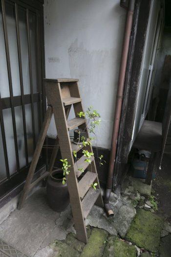 昔ながらの引戸の玄関には、前川秀樹氏の折りたたみ式はしご。