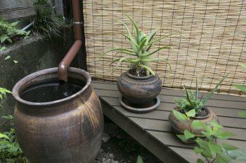 越前の古い甕に、といを伝って雨水が落ちる。庭の散水はこれで充分。ボウフラはメダカの餌に。