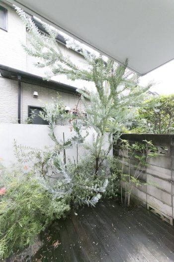 『SOLSO』に依頼した植栽。グリーンのメリハリがつくように、シルバー系のブルーブッシュなどをセレクト。