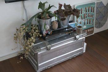 ミリタリーのトランクに観葉植物をアレンジしてディスプレイ。