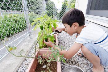 東南側にある庭でピーマンを収穫する朔雲君。ピーマンは自ら育てたものという。