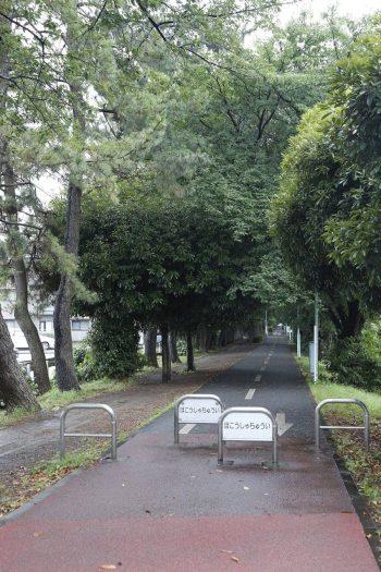 40km弱の遊歩道が続くグリーンロード。散歩やジョギングに最適。