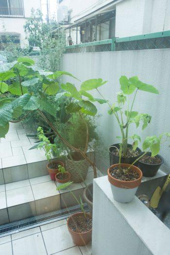 植栽は「SOLSO」に依頼。シルバー系のグリーンが白のタイルに映える。