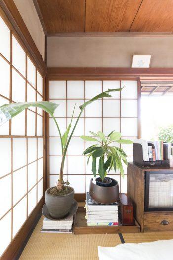観葉植物が和の空間にもなじむ。右の本棚は骨董市で購入。