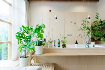 最近、グリーンを集めるのが楽しいという小川夫妻。さまざまな種類のグリーンがキッチンの周囲に置かれている。