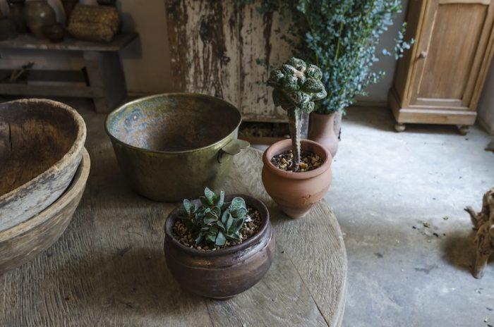 アンティークの壺にユニークな形のサボテンを合わせたもの。もともと壺や器として仕入れたものが植物を合わせるとまた新たなモノとしての魅力を放つ。