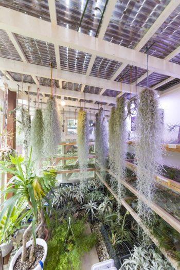 バルコニーの下に作った温室の中には、エアプランツがぎっしり。冬でも10度を下回らないように管理されている。