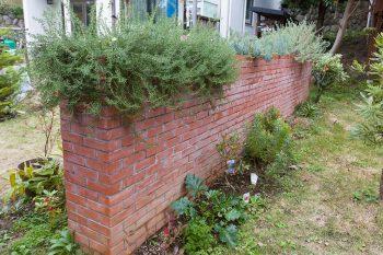 レンガ造りの塀の上に土を入れるスペースを作り、ローズマリーなどを植えている。