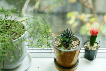 キッチンの窓際に並んだ鉢植え。外の植物と呼応して、空間にいきいきとした表情を与える。