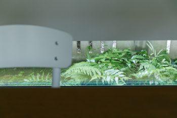 北側の壁面には、地窓を設けた。ダイニングテーブル越しに、苔とシダの植えられた庭が見える。