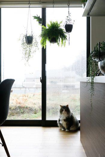 ダイニングの窓辺も愛猫トンガリの指定席。トンガリが窓から外を眺めていると、近所の子どもたちがやってくるそうだ。