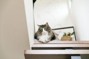 階段上からこちらの様子をうかがう、愛猫トンガリ。フサフサの毛並みで体も大きいが、奥さま曰く「すごく小心者」なのだそう。