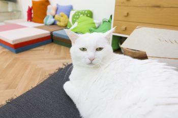 8歳のマロンちゃんは、2階の住人。もう一匹猫ちゃんがいるそうだが、人見知りでこの日は会えずじまい。