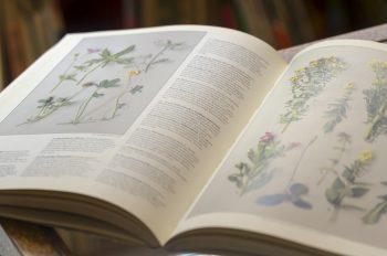 全ページオールカラーで1月から順に季節の植物が紹介されている。同じシリーズでヨーロッパのキノコをまとめた本もある。