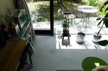 土間の植物も気持ちよさそうに日向ぼっこ。愛猫ちくわのトイレも土間に設置。掃除もしやすく便利なのだそう。