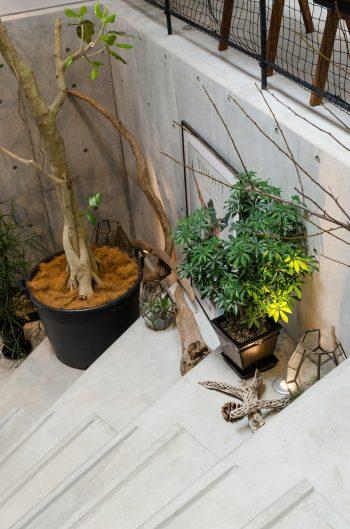 階段の端には観葉植物の置けるスペースがつくられた。下に置かれているのはHさんが国内外の海岸で集めた流木。