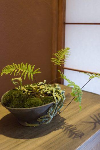 代々受け継がれた箪笥の上に、台湾青根葛(タイワンアオネカズラ)。「夏に落葉するので、冬のほうが葉が美しいです」