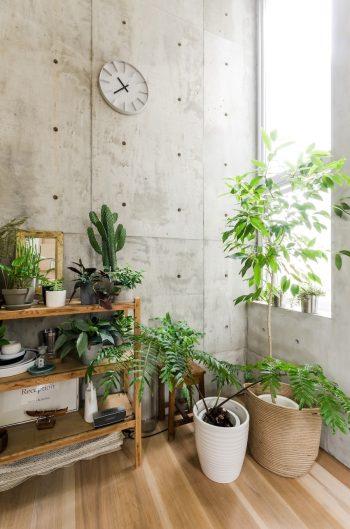 開口が多いため室内の緑の生育には良い環境だという。
