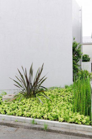 北側の庭の緑。こちらもガ―デンデザイナーによるもの。