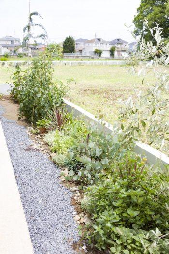 家のまわりではレタスやトマト、ハーブなどを育てている。