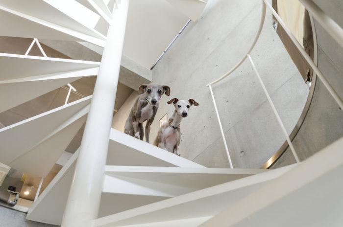 2 階から見下ろすシャマルとカリフ。