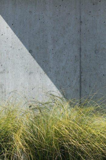RCの塀を背景にすることで、植物がより一層豊かな表情を見せる。