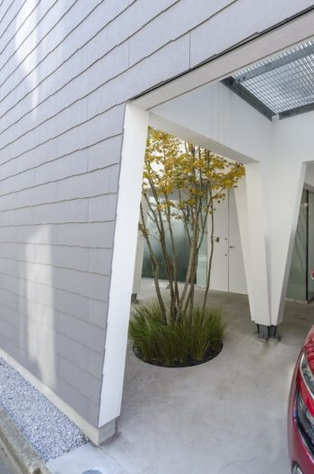 カエデは玄関前に植えられている。