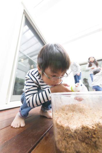 虫が大好きな子どもたち。カブトムシを育てていて、次男(5歳)も夢中。