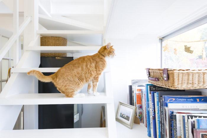 14歳のおじいちゃん猫グーも、窓から景色を見るのがお気に入り。いつもここからじっと外を眺めているのだとか。