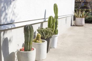 多肉植物やサボテンが好きというご夫妻。玄関脇で訪れる人を迎える。