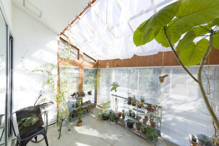 杉板の壁にモルタルの床を採用。もともと持っていた多肉植物やサボテンを中心に並べている。