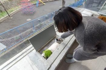 3階のベンチ部分から、2階出窓の上に置いた緑に水をやる奥さん。奥さん曰く「新しい壁面緑化」。