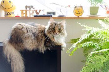 ひとなつっこいネコのこなつ。撮影時も素直にモデルをこなしてくれた。