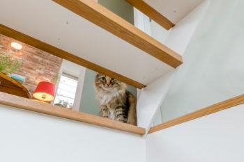 階段の隙間からのぞくこなつ。