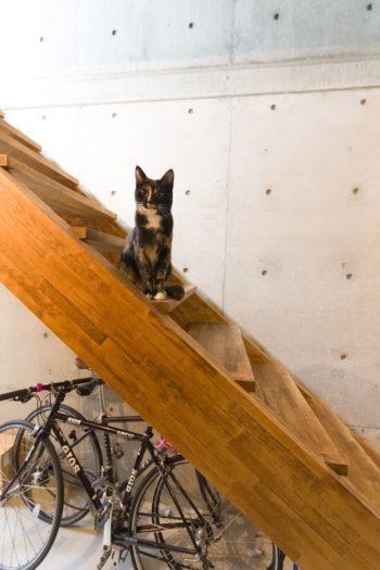 人なつこい愛猫のブラン(1歳♀)。リビングの本棚はキャットウォークにも。