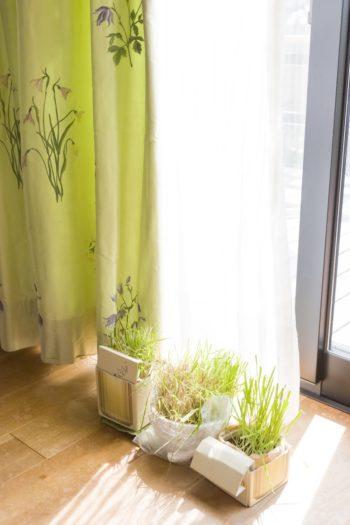 奥さまが大好きという『フィスバ』のカーテン。草花をモチーフにしたデザインと美しいグリーンに一目惚れしたそう。