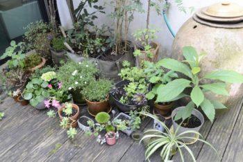 大小様々な植木鉢を置いた中庭のミニガーデン。
