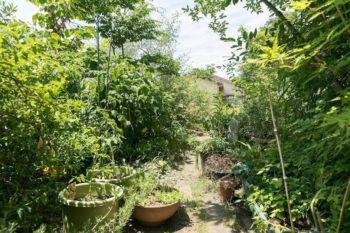 スオウ、アジサイ、ブルーベリーなど建て替え前から育てていた思い入れのある植物は移植した。写真奥に境界なくO邸の庭が続く。