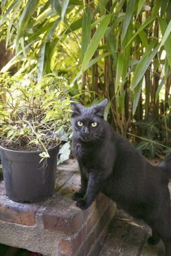ツヤツヤの毛並みが自慢のサンバちゃん。他にも2匹の猫がいる。