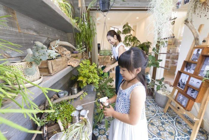 多肉植物を中心に観葉植物がバランスよく飾られている。水やりは主に奥さまと長女が担当。