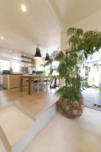 部屋内には大ぶりな観葉植物が所々に置いてある。これは、丸太っぽい鉢が気に入っているそう。