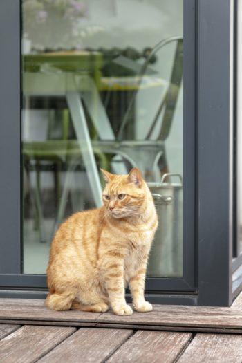猫のミヌにとって、広い庭とウッドデッキは楽園。