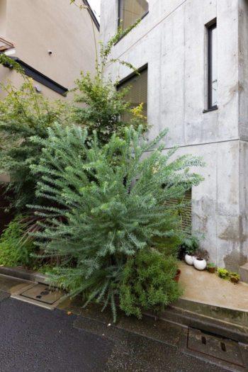 アカシアやハーブなどの植栽の奥に、地下のアトリエに降りる階段がある。