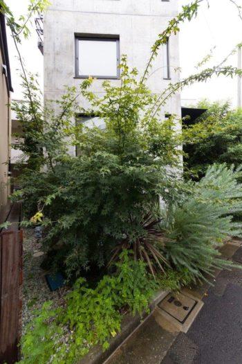 隣地との間には砂利を敷き、後ろ側の庭まで繋げた。秋はモミジが色づく。