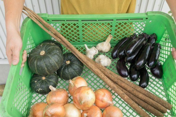 Sさんが作る元気な季節の野菜たち。