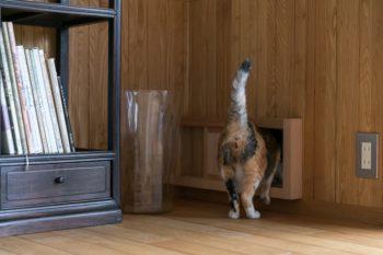 広縁と屋外を行き来できる猫ドア。