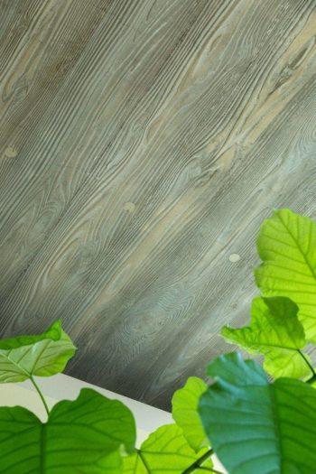 RCの天井に木目が。コンクリートを流し込む型枠を杉板で作ることで木目が現れる。植物との相性も抜群だ。
